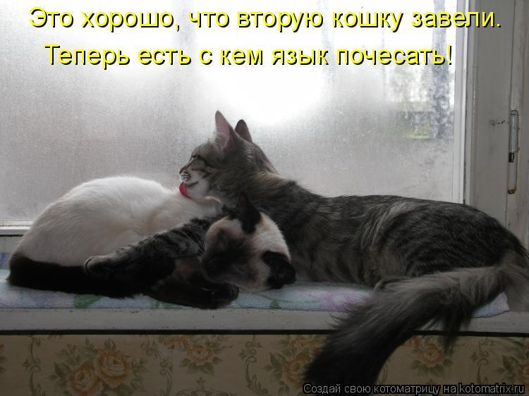 Котоматрица: Это хорошо, что вторую кошку завели. Теперь есть с кем язык почесать!