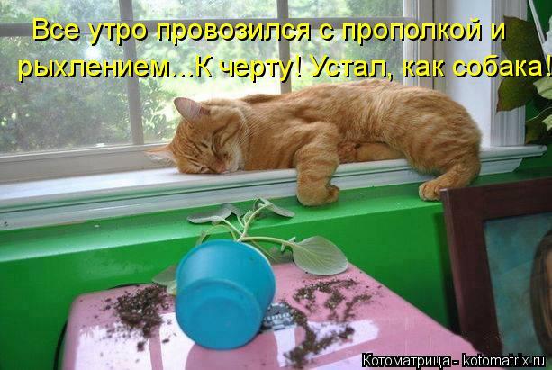 Котоматрица: Все утро провозился с прополкой и  рыхлением...К черту! Устал, как собака!