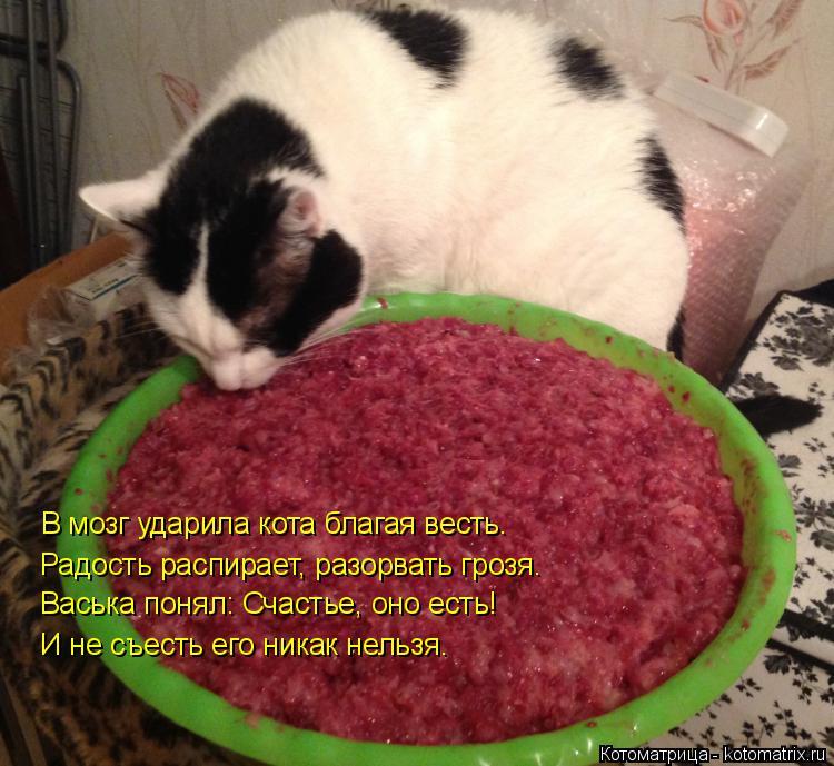 Котоматрица: В мозг ударила кота благая весть. Радость распирает, разорвать грозя. Васька понял: Счастье, оно есть! И не съесть его никак нельзя.