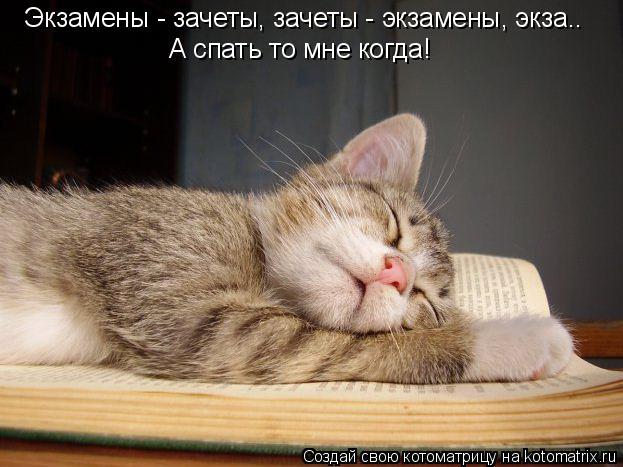 Котоматрица: Экзамены - зачеты, зачеты - экзамены, экза.. А спать то мне когда!
