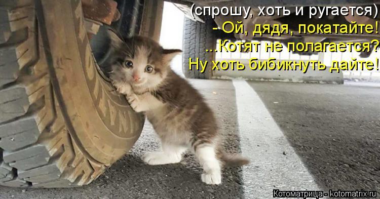 Котоматрица: (спрошу, хоть и ругается) - Ой, дядя, покатайте! ...Котят не полагается? Ну хоть бибикнуть дайте!