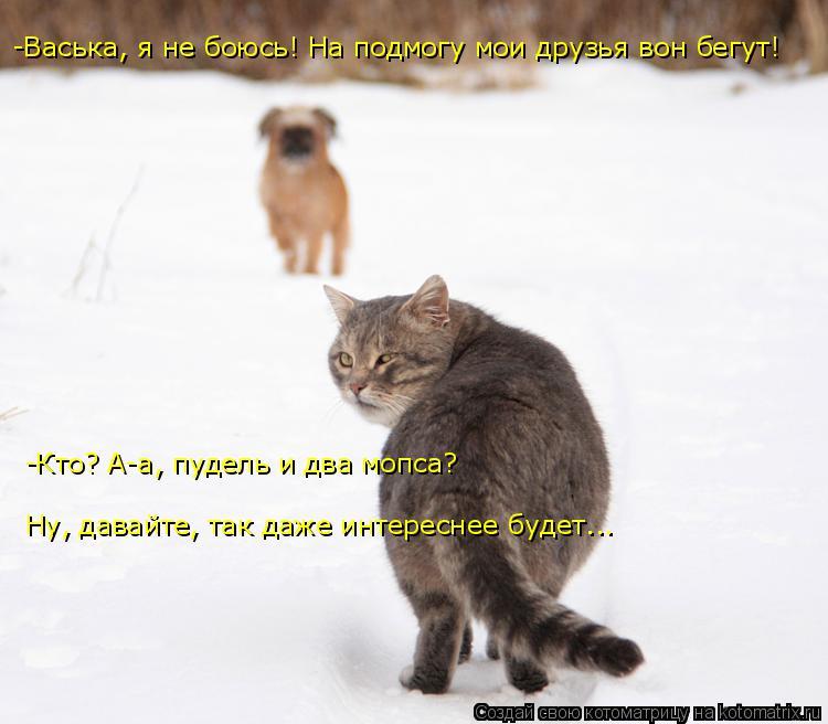 Котоматрица: -Васька, я не боюсь! На подмогу мои друзья вон бегут! -Кто? А-а, пудель и два мопса? Ну, давайте, так даже интереснее будет...