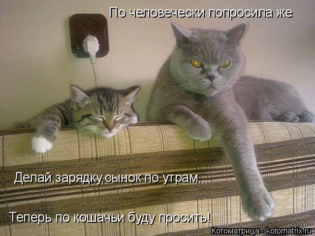 Котоматрица: По человечески попросила же Делай,зарядку,сынок по утрам... Теперь по кошачьи буду просить!