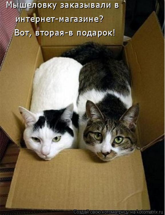 Котоматрица: Мышеловку заказывали в  интернет-магазине?  Вот, вторая-в подарок!