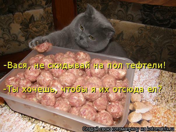 Котоматрица: -Вася, не скидывай на пол тефтели! -Ты хочешь, чтобы я их отсюда ел?