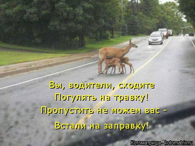 Котоматрица: Вы, водители, сходите  Погулять на травку! Пропустить не можем вас - Встали на заправку!