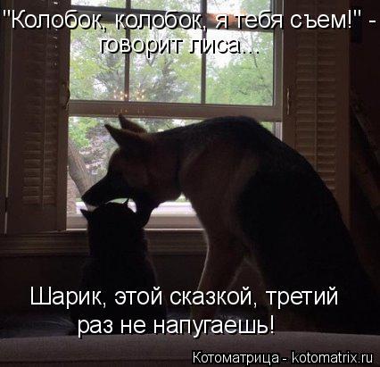 """Котоматрица: """"Колобок, колобок, я тебя съем!"""" -  говорит лиса... Шарик, этой сказкой, третий раз не напугаешь!"""