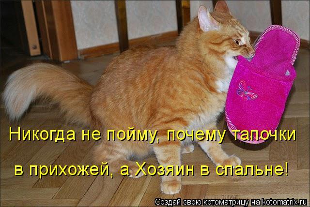 Котоматрица: Никогда не пойму, почему тапочки  в прихожей, а Хозяин в спальне!