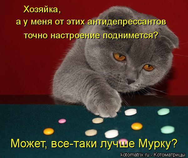 Котоматрица: Хозяйка, а у меня от этих антидепрессантов точно настроение поднимется? Может, все-таки лучше Мурку?