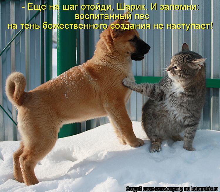 Котоматрица: - Еще на шаг отойди, Шарик. И запомни: воспитанный пес  на тень божественного создания не наступает!