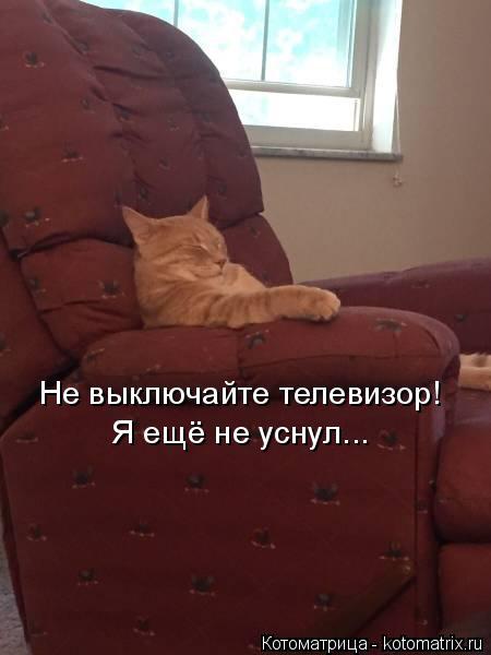 Котоматрица: Не выключайте телевизор! Я ещё не уснул...