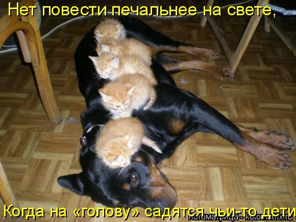 Котоматрица: Нет повести печальнее на свете,  Когда на «голову» садятся чьи-то дети.