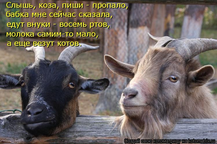 Котоматрица: Слышь, коза, пиши - пропало, бабка мне сейчас сказала, едут внуки - восемь ртов, молока самим-то мало, а еще везут котов.