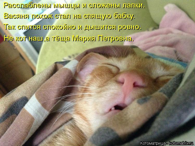 Котоматрица: Расслаблены мышцы и сложены лапки. Васяня похож стал на спящую бабку. Так спится спокойно и дышится ровно. Не кот наш,а тёща Мария Петровна.