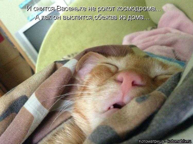 Котоматрица: И снится Васеньке не рокот космодрома... А как он выспится,сбежав из дома...