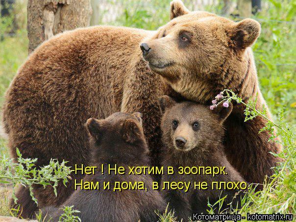 Котоматрица: -Нет ! Не хотим в зоопарк. Нам и дома, в лесу не плохо.