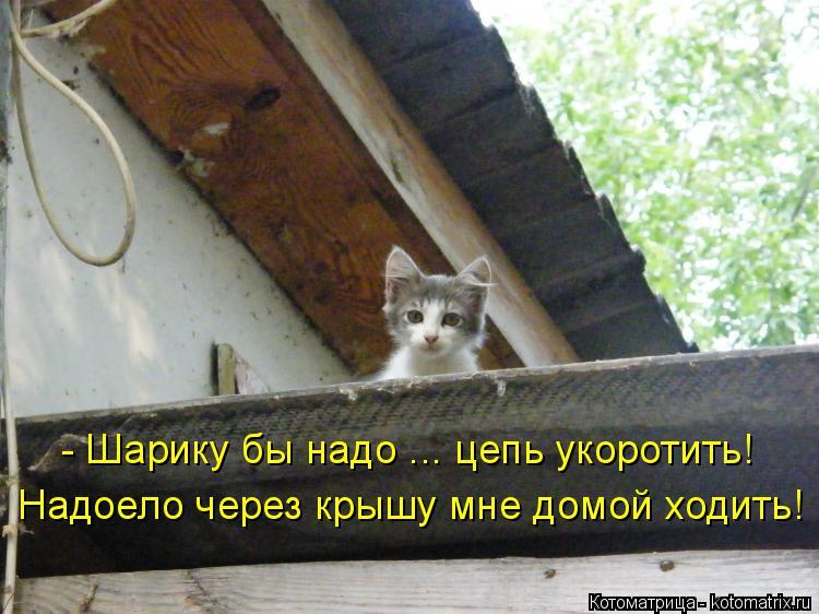 Котоматрица: - Шарику бы надо ... цепь укоротить! Надоело через крышу мне домой ходить!