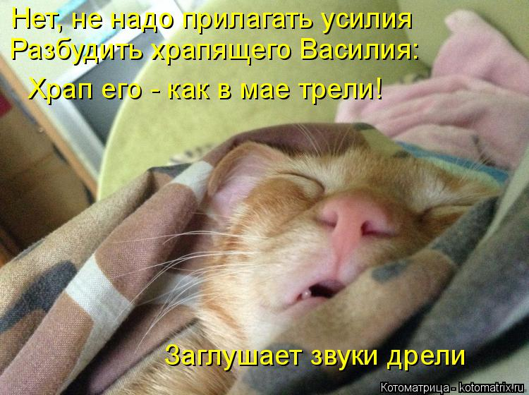 Котоматрица: Нет, не надо прилагать усилия Разбудить храпящего Василия: Храп его - как в мае трели! Заглушает звуки дрели