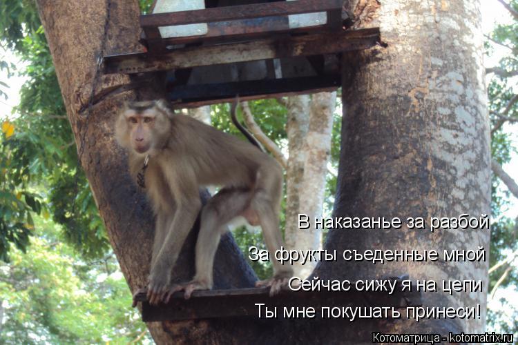 Котоматрица: В наказанье за разбой За фрукты съеденные мной Сейчас сижу я на цепи Ты мне покушать принеси!