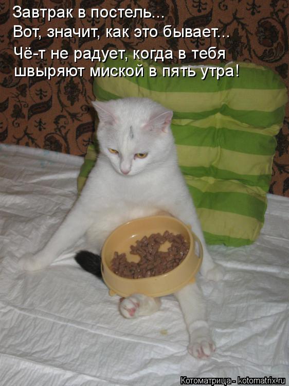 Котоматрица: Завтрак в постель... Вот, значит, как это бывает... Чё-т не радует, когда в тебя  швыряют миской в пять утра!