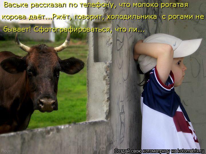 Котоматрица: Ваське рассказал по телефону, что молоко рогатая  корова даёт...Ржёт, говорит, холодильника  с рогами не  бывает! Сфотографироваться, что ли...