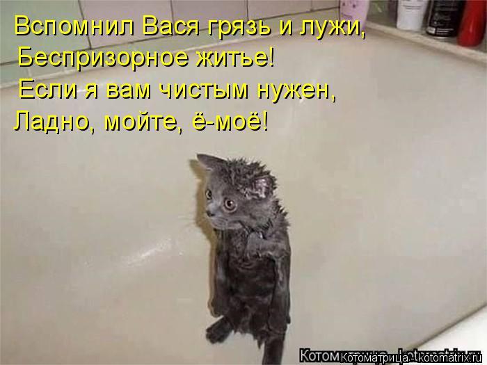 Котоматрица: Вспомнил Вася грязь и лужи, Беспризорное житье! Если я вам чистым нужен, Ладно, мойте, ё-моё!