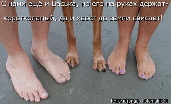 Котоматрица: С нами ещё и Васька, но его на руках держат- коротколапый, да и хвост до земли свисает!
