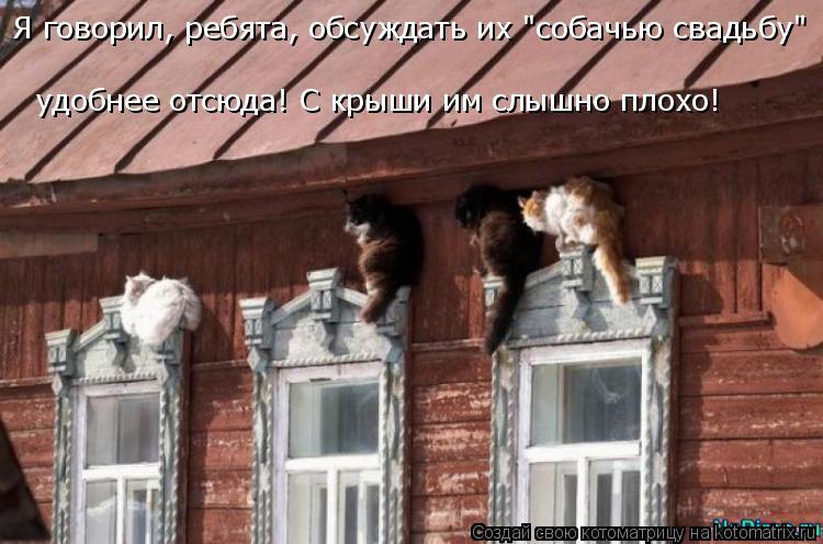 """Котоматрица: Я говорил, ребята, обсуждать их """"собачью свадьбу""""  удобнее отсюда! С крыши им слышно плохо!"""