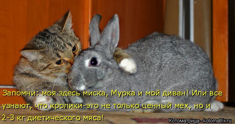 Котоматрица: 2-3 кг диетического мяса! узнают, что кролики-это не только ценный мех, но и  Запомни: моя здесь миска, Мурка и мой диван! Или все