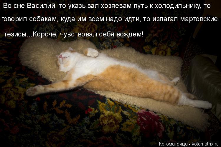 Котоматрица: Во сне Василий, то указывал хозяевам путь к холодильнику, то говорил собакам, куда им всем надо идти, то излагал мартовские тезисы...Короче, ч