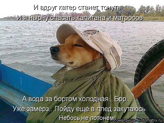 Котоматрица: И вдруг катер станет тонуть... И я нырну спасать капитана и матросов... А вода за бортом холодная...Брр... Уже замёрз...Пойду ещё в плед закутаюсь