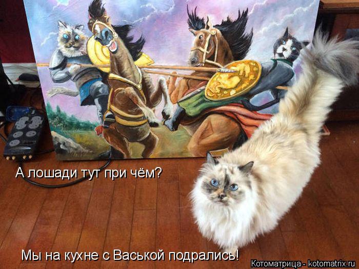 Котоматрица: А лошади тут при чём? Мы на кухне с Васькой подрались!