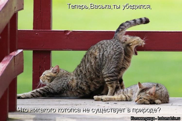 Котоматрица: Теперь,Васька,ты убедился, Что никакого котопса не существует в природе?