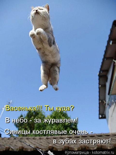 Котоматрица: Васенька!!! Ты куда? В небо - за журавлем! Синицы костлявые очень -  в зубах застряют!