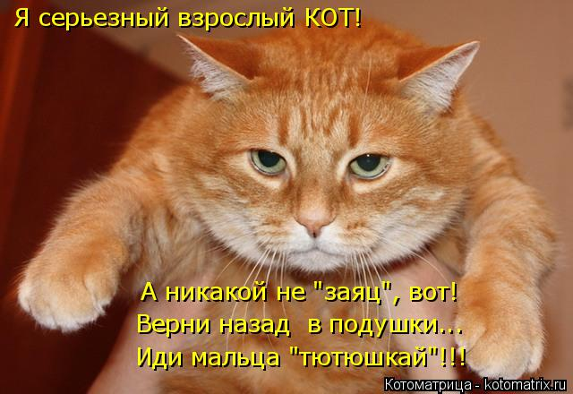 """Котоматрица: Я серьезный взрослый КОТ! Верни назад  в подушки... Иди мальца """"тютюшкай""""!!! А никакой не """"заяц"""", вот!"""