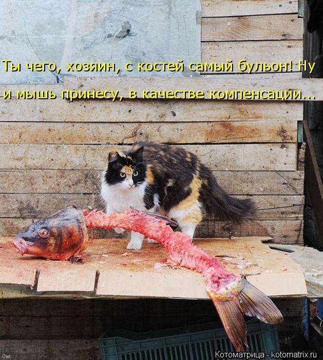 Котоматрица: и мышь принесу, в качестве компенсации... Ты чего, хозяин, с костей самый бульон! Ну