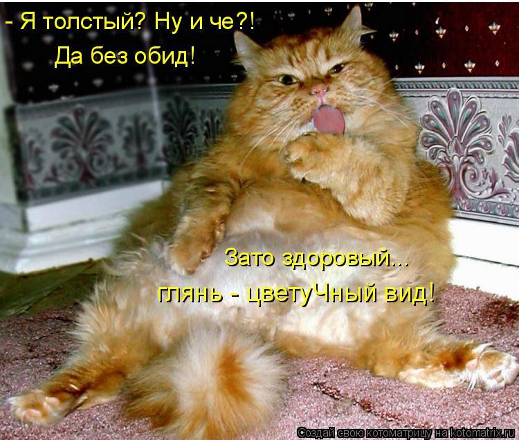 Котоматрица: - Я толстый? Ну и че?! глянь - цветуЧный вид! Да без обид! Зато здоровый...