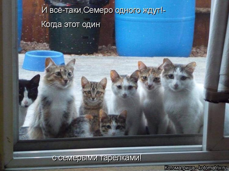 Котоматрица: И всё-таки,Семеро одного ждут!- Когда этот один с семерыми тарелками!