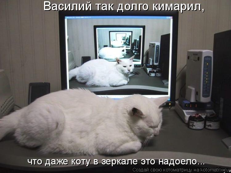 Котоматрица: что даже коту в зеркале это надоело... Василий так долго кимарил,