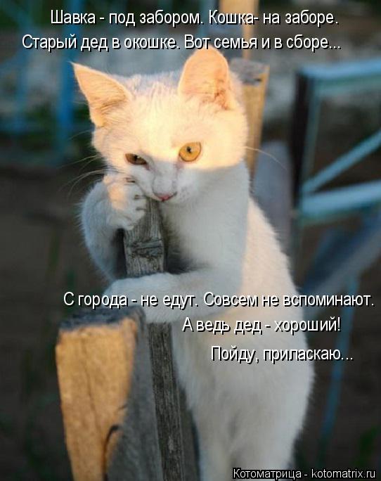 Котоматрица: Шавка - под забором. Кошка- на заборе. Старый дед в окошке. Вот семья и в сборе... С города - не едут. Совсем не вспоминают. А ведь дед - хороший! П