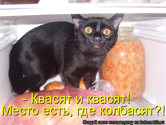 Котоматрица: - Квасят и квасят! Место есть, где колбасят?!