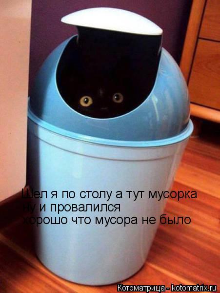 Котоматрица: Шел я по столу а тут мусорка ну и провалился  хорошо что мусора не было
