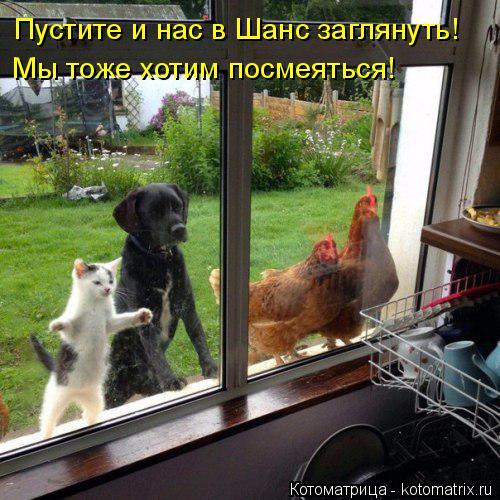 Котоматрица: Пустите и нас в Шанс заглянуть!  Мы тоже хотим посмеяться!