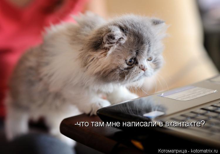 Котоматрица: -что там мне написали в вкантакте?