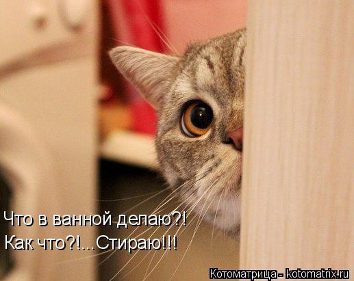 Котоматрица: Что в ванной делаю?! Как что?!...Стираю!!!