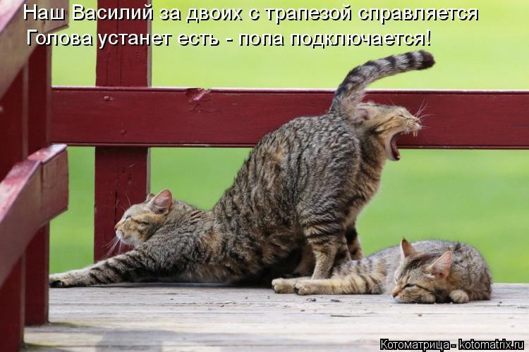 Котоматрица: Наш Василий за двоих с трапезой справляется Голова устанет есть - попа подключается!