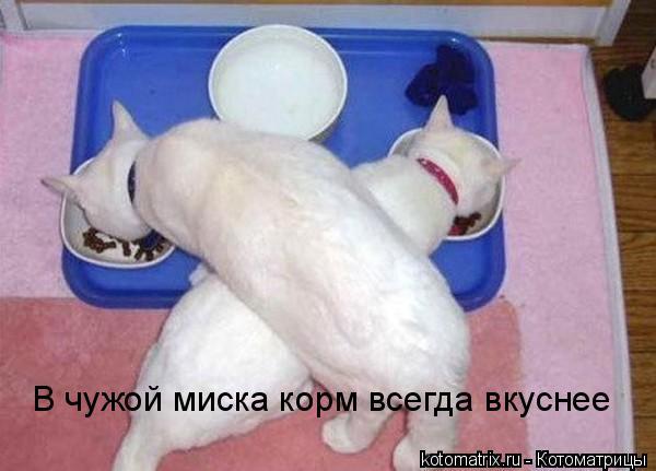 Котоматрица: В чужой миска корм всегда вкуснее