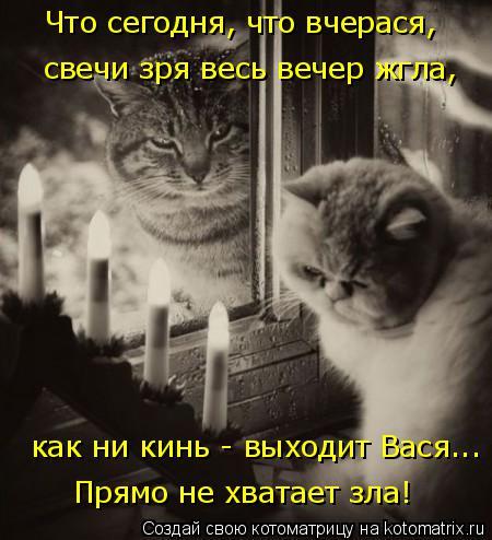 Котоматрица: Что сегодня, что вчерася, как ни кинь - выходит Вася... Прямо не хватает зла! свечи зря весь вечер жгла,