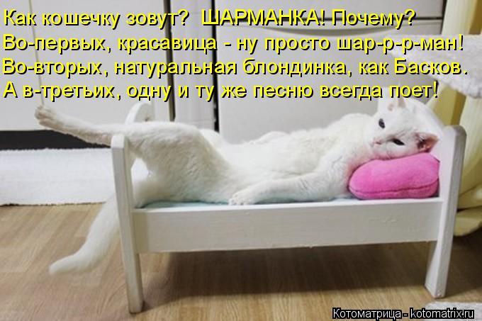 Котоматрица: Как кошечку зовут?  ШАРМАНКА! Почему? Во-первых, красавица - ну просто шар-р-р-ман! Во-вторых, натуральная блондинка, как Басков. А в-третьих, од