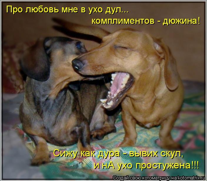 Котоматрица: Про любовь мне в ухо дул... комплиментов - дюжина! Сижу как дура - вывих скул, и нА ухо простужена!!!